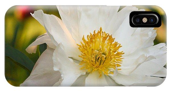 White Floribunda Rose IPhone Case