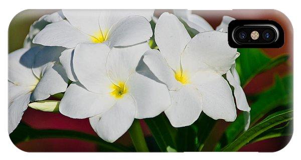 White Frangipani IPhone Case