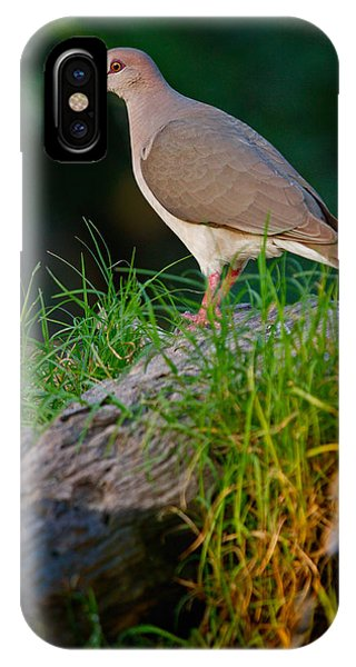 White-fronted Dove IPhone Case
