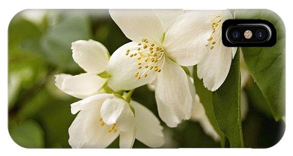 White Garden I IPhone Case