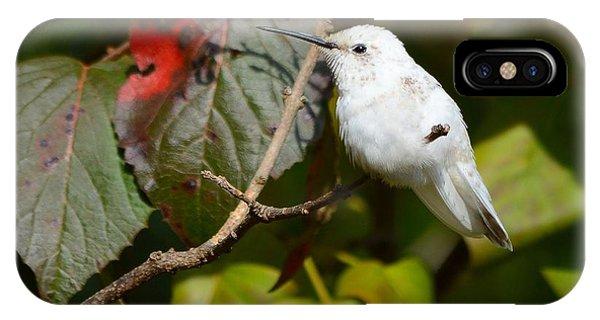 White Hummingbird IPhone Case
