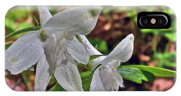 White Larkspur On Rock Spring Trail Near Natchez Trace Parkway-alabama IPhone Case