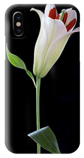 White Lily Bud IPhone Case