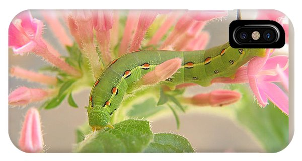Caterpillar iPhone Case - White-lined Sphinx Moth Caterpillar by David and Carol Kelly