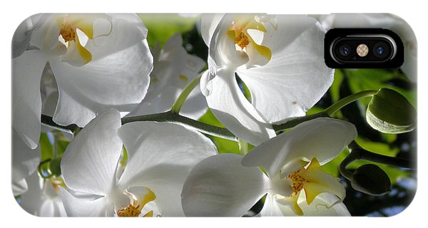 White Orchid In Light IPhone Case