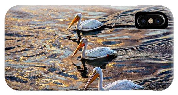 White Pelicans  In Golden Water IPhone Case