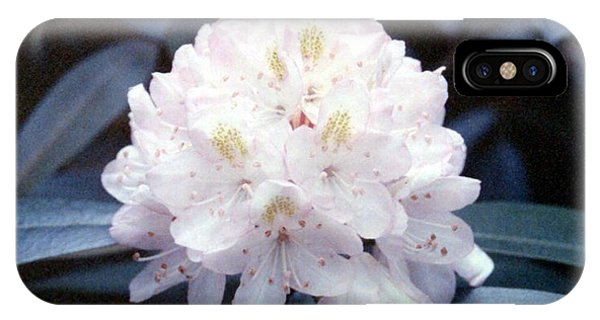 White Rhododendron IPhone Case