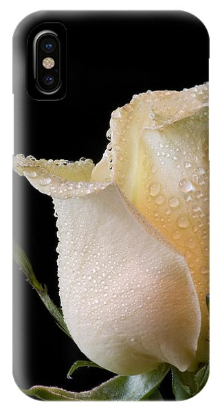 White Rose Close-up IPhone Case