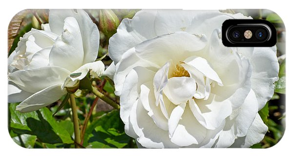 IPhone Case featuring the photograph White Rose by Jon Exley