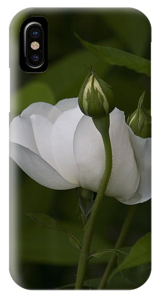 White Rose With Buds IPhone Case