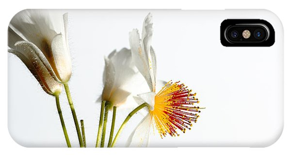 White Sparmannia Africana Plant. IPhone Case