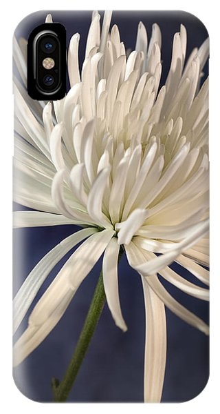 White Spider Mum On Blue IPhone Case