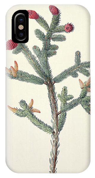 Spruce iPhone Case - White Spruce (picea Glauca) by Natural History Museum, London/science Photo Library