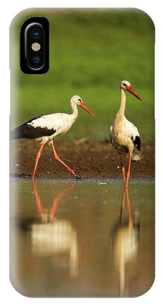 White Stork (ciconia Ciconia) IPhone Case