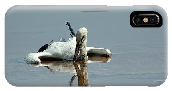 Drown iPhone Case - White Stork Drowning In The Dead Sea by Photostock-israel/science Photo Library