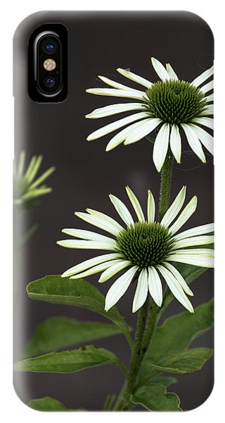 White Swans IPhone Case