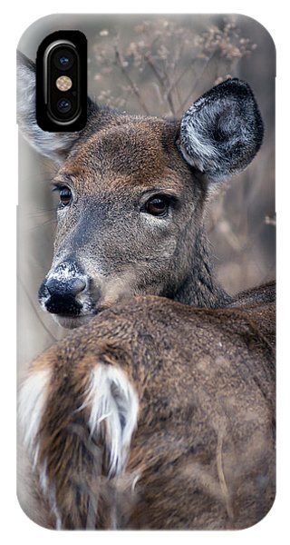 White-tail Beauty IPhone Case