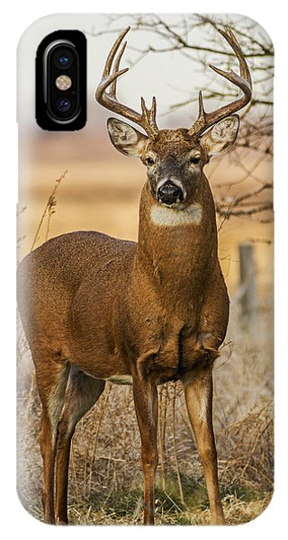White-tail Buck IPhone Case