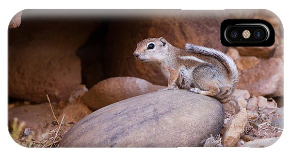 White-tailed Antelope Squirrel IPhone Case