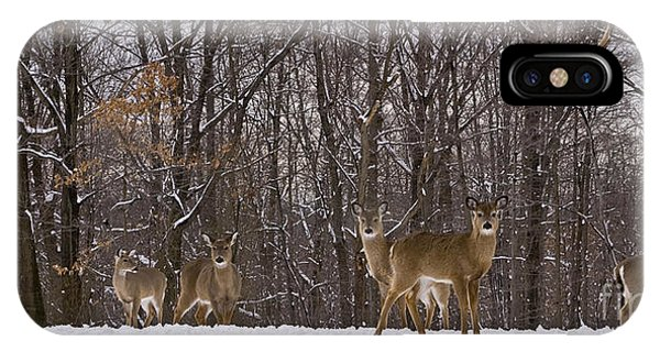White Tailed Deer IPhone Case