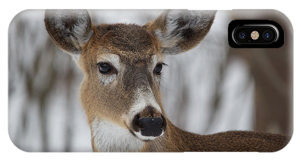IPhone Case featuring the photograph White-tailed Deer At Old Quarry Trail by Nature and Wildlife Photography