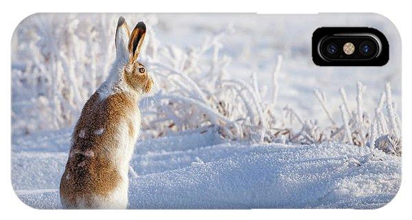 Frost iPhone Case - White-tailed Jackrabbit by Shlomo Waldmann
