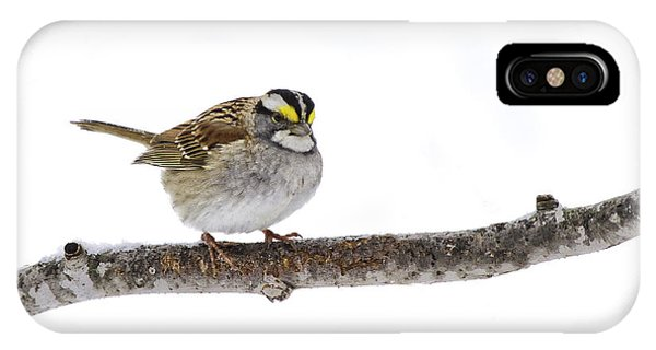 White-throated Sparrow IPhone Case