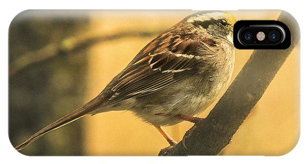 Migratory Birds iPhone Case - White-throated Sparrow by Susan Capuano