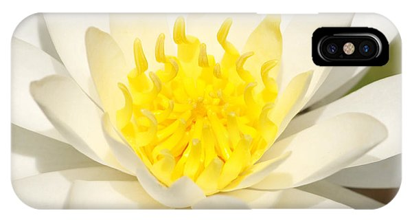 White Waterlily IPhone Case
