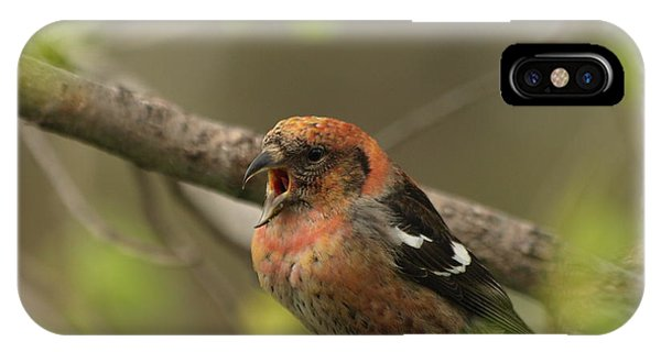 White-winged Crossbill IPhone Case