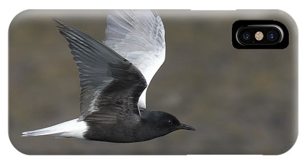 White-winged Tern IPhone Case