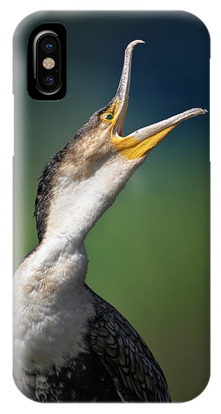 Bird iPhone Case - Whitebreasted Cormorant by Johan Swanepoel