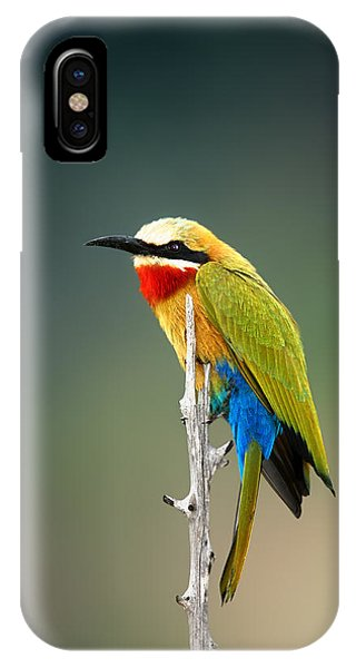 Bee iPhone X Case - Whitefronted Bee-eater by Johan Swanepoel