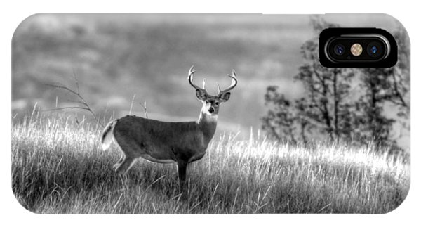 Whitetail Buck B/w IPhone Case