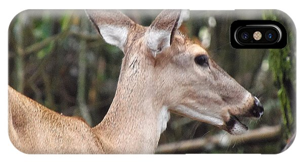 Whitetail Deer 038 IPhone Case