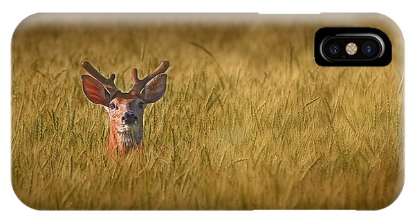 White Tailed Deer iPhone Case - Whitetail Deer In Wheat Field by Tom Mc Nemar
