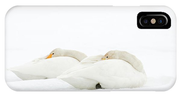 Behaviour iPhone Case - Whooper Swans Resting On Snow by Dr P. Marazzi