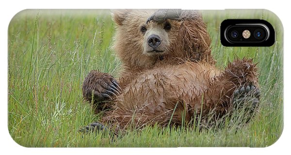 Bear Creek iPhone Case - Who's There ? by Renee Doyle