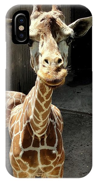 Why The Long Neck? IPhone Case