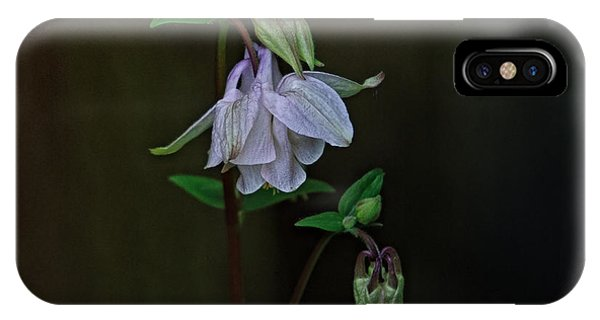 Aquilegia iPhone Case - Wild Beauty by Susan Capuano