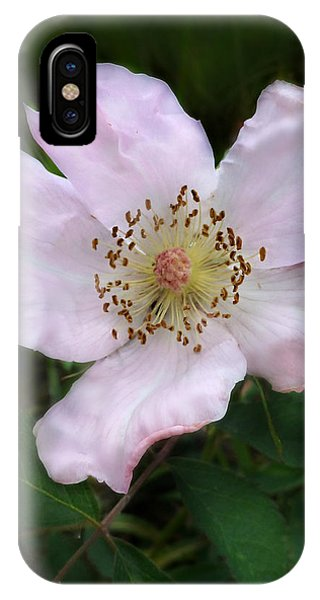 Wild Carolina Rose IPhone Case