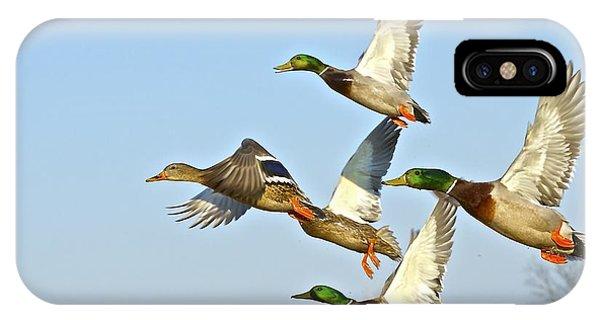 Wild Ducks IPhone Case