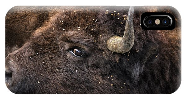 Wild Eye - Bison - Yellowstone IPhone Case
