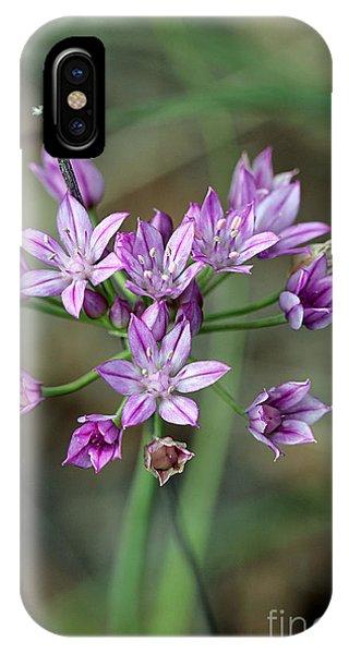 Wild Garlic - Allium Drummondii IPhone Case