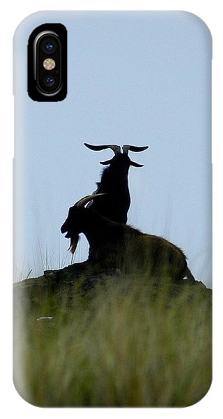 Wild Goats Of Kona IPhone Case