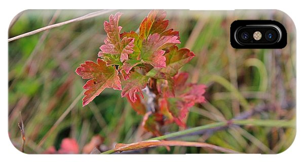 Wild Gooseberry Leaves IPhone Case
