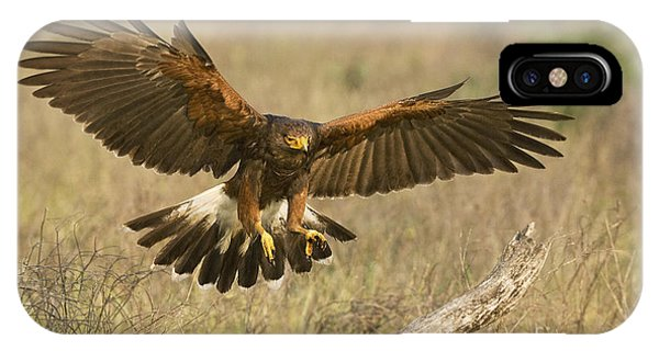 IPhone Case featuring the photograph Wild Harris Hawk Landing by Dave Welling