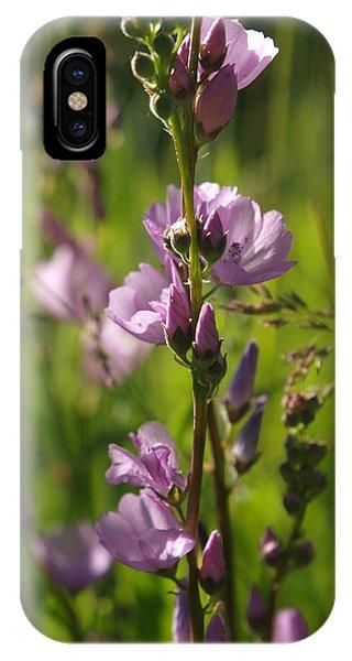 Wild Hollyhock IPhone Case