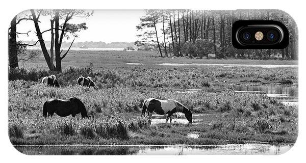 Wild Horses Of Assateague Feeding IPhone Case