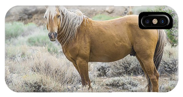 Wild Mustang Stallion IPhone Case